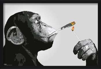 Poster encadré Steez - Monkey Smoking